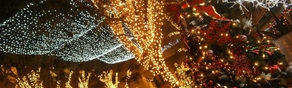 christmas lights in naple