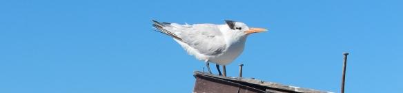 bird in the wind