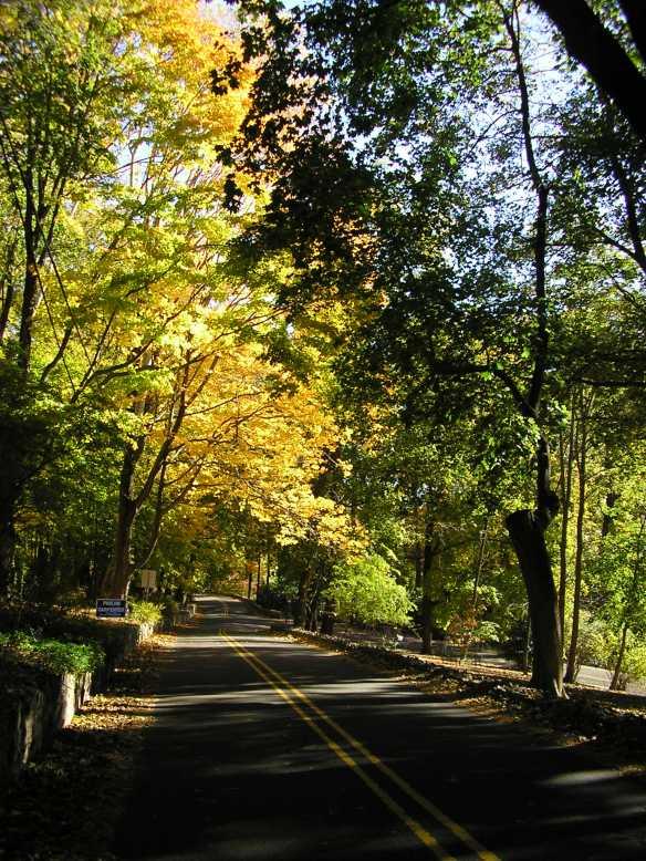 NJ trees 2