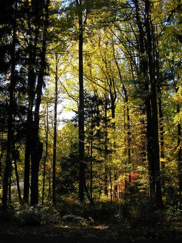 NJ trees 1