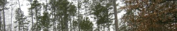 dreary trees