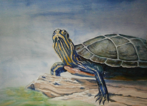 turtle cropped