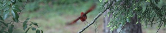Cardinal 004