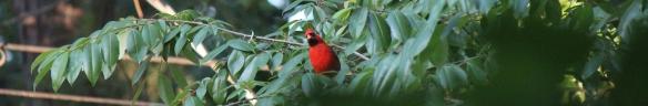 Cardinal 007