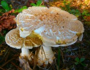 amazing mushroom1