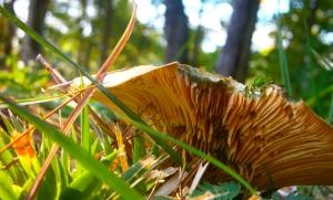 amazing mushroom3
