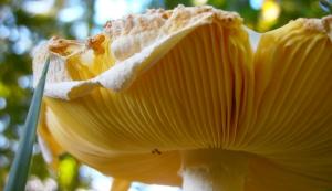 amazing mushroom4