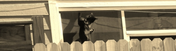 cat hanging