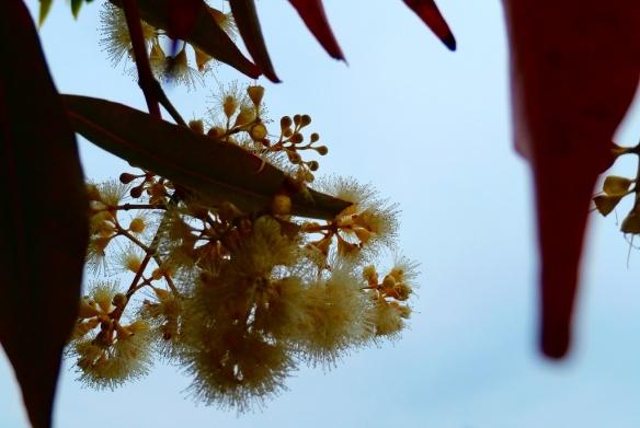 scents8